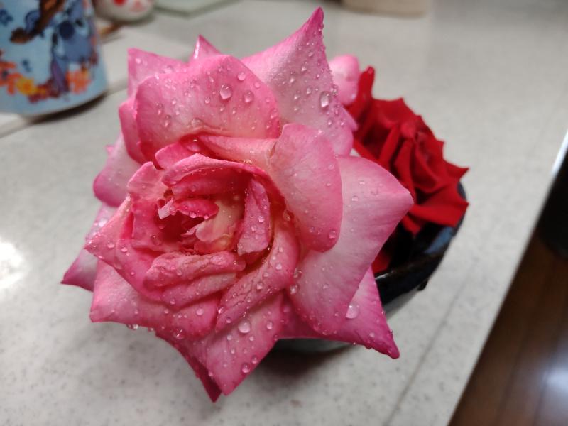 雨上がりのバラの切り花